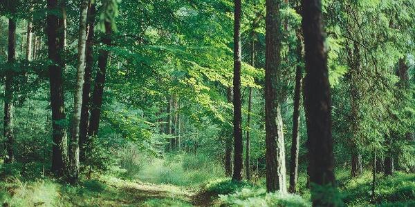 Paintner Forst