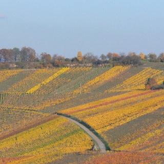 Sieben Linden Im Herbst