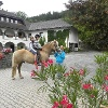 Reiterhof-Familienpension-Seebichlhof