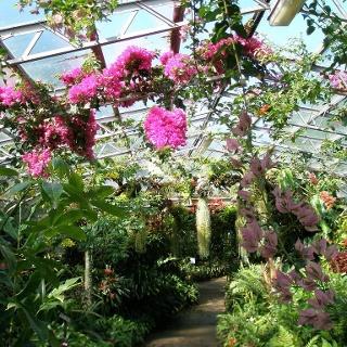 Botanische Vielfalt im Duthie Park