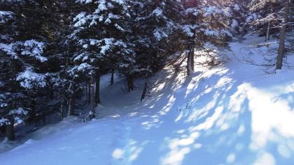 Schneeschuhwandern im Wald