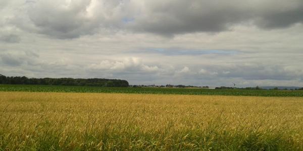 Haguenauer Wald