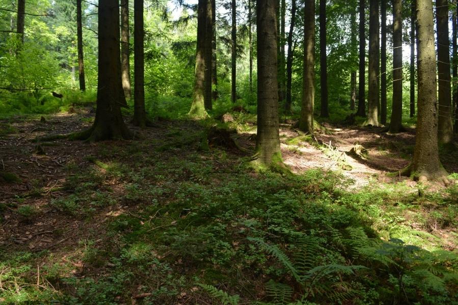 Trekking Camp Seibelseckle - Camp Grimbach