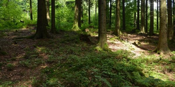 Trekking-Camp Seibelseckle