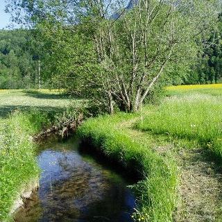 Der Ulvenbach in Bizau