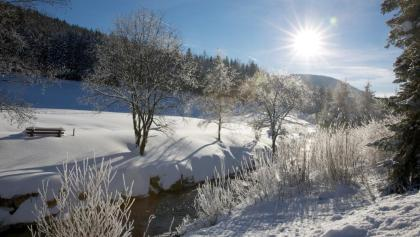 Das Buhlbachtal im Winter