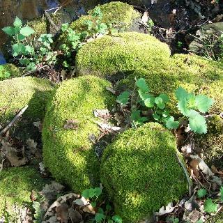 Steine mit Moos in Sunde