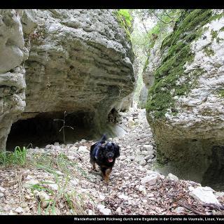 Wanderhund beim Rückweg durch eine Engstelle in der Combe de Vaumale