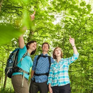 Baumvielfalt auf dem Waldlehrpfad