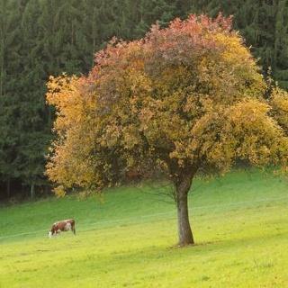 Rund um Welschbollenbach
