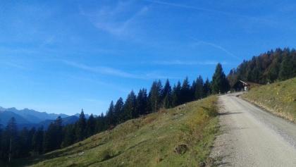 Forstweg beim Aufstieg