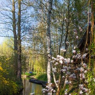 Frühling im Spreewald