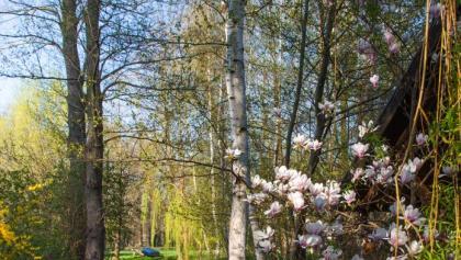 Frühlingshafter Spreewald