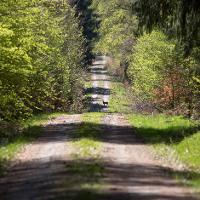Wildbegegnung im Nationalpark Hunsrück-Hochwald