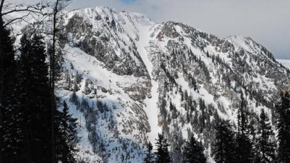 Die Schafries unter dem Schneealpenhaus vom Forstweg im Grubbichlwald aus gesehen