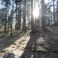 Die Frühlingssonne bahnt sich einen Weg durch die Bäume