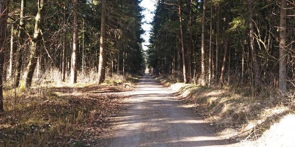 Durch den Haunstetter Wald