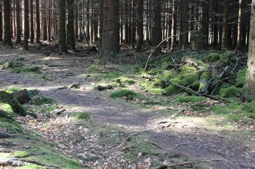 Waldrouten - Etappe Sundern Amecke - Arnsberg Schlossberg