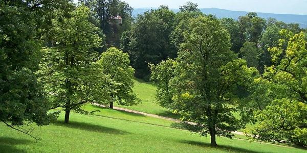 Altensteiner Park, Blick zum Pleß bei Breitungen