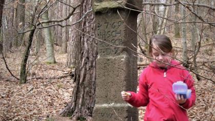 Die 7-jährige Wandermaus am Studerbild