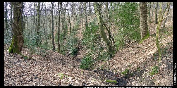 Wald südwestlich von Sudberg zwischen Müngsten und Stiepelhaus