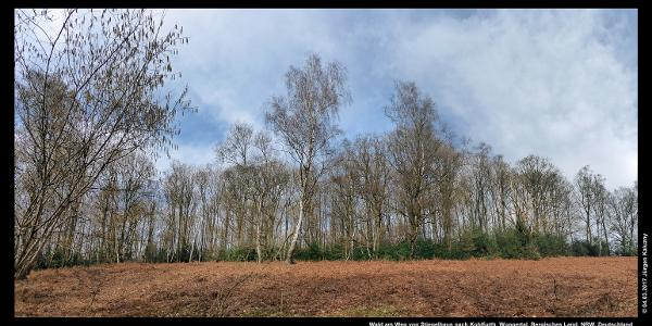 Wald am Weg von Stiepelhaus nach Kohlfurth
