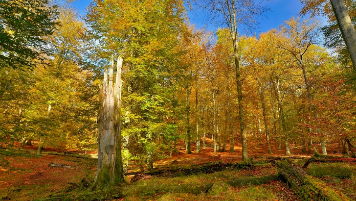 UNESCO Welterbe Serrahner Buchenwälder