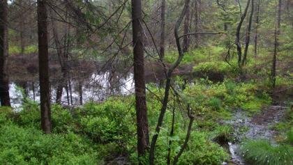 Moorgebiet Kleiner Kranichsee