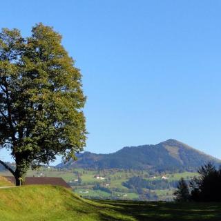 Blick auf das Naturdenkmal