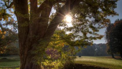 Sonnenaufgang im Park Dösen