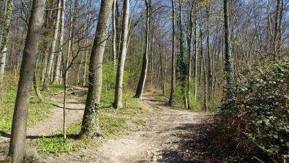 Aufstieg von Münchensteiner Holzbrücke zur Rütihard
