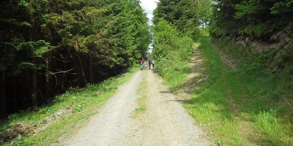 Der Weg windet sich am Hang entlang.