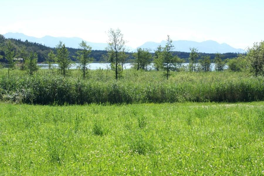 kulinarischer Radweg - Prien ins Naturschutzgebiet Eggstätter Seenplatte (Hartsee)