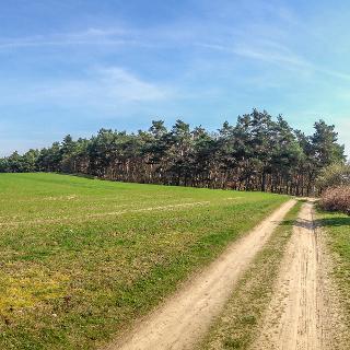 Am Feld entlang
