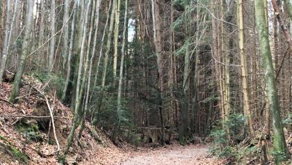 Waldweg zwischen Fischbach und Lechen
