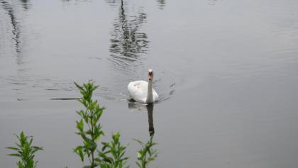 Wasservögel beobachten an der Wertach