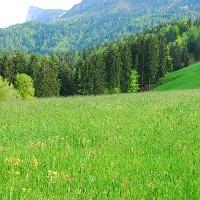 Fertile pasture in a mountain landscape