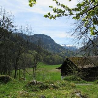 Aussicht Richtung Grebauer Moos