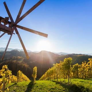 Weinanbau im Schilcherland