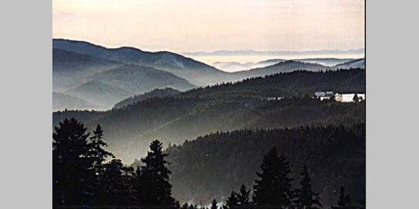 Blick von oben über den Schwarzwald.