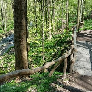 Holzbrücke im Saubachtal
