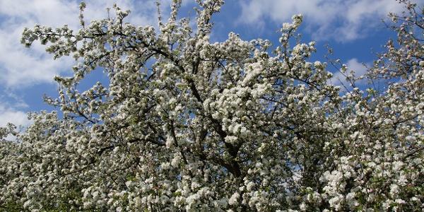 Blütenpracht auf dem Pinkowitzberg