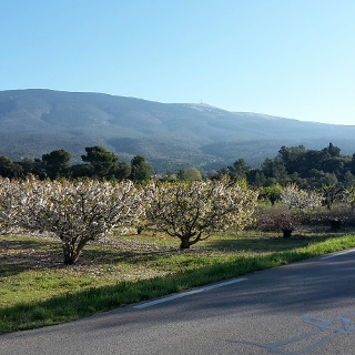 Mont Ventoux in the morning sun!