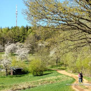 Wanderweg Kirschblütentraum am Südhang des Hesselberg