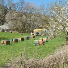 Bienenstöcke am Weg.