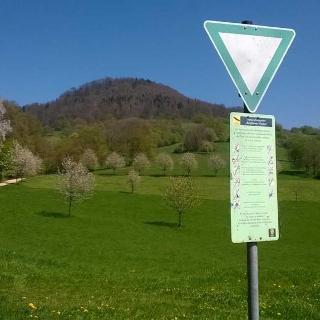 Naturschutzgebiet  Berghauser Matten Schönberg