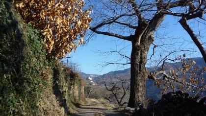 Zwischen Wald und Weinberg