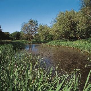 Stodmarsh Nature Reserve