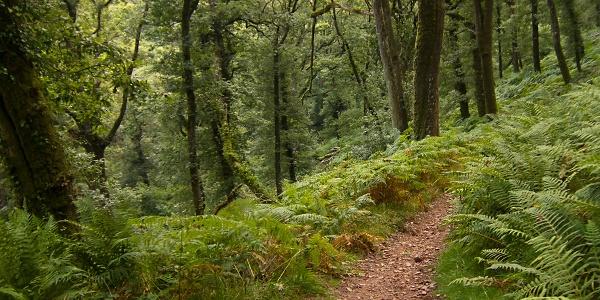 Weg zum Steg Horner Water