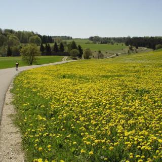 Sontheimer Blumenwiese